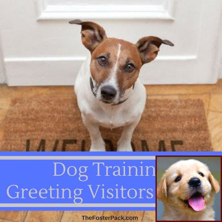 In House Potty Training A Puppy And Dog Training Courses In