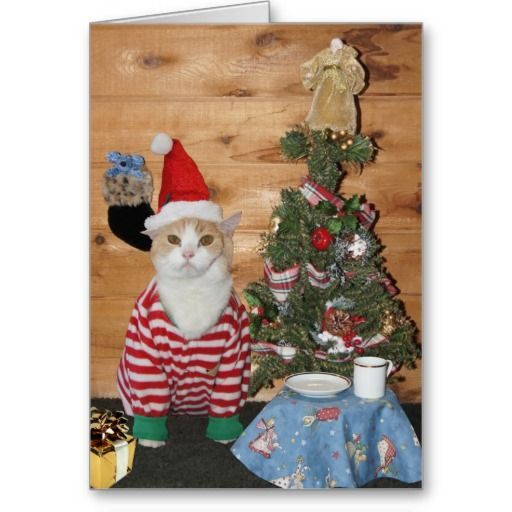 Funny Cat/Kitty Christmas Morning Greeting Cards