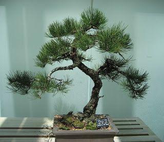 Japanese Bonsai Tree Tattoo Como bonsai trees