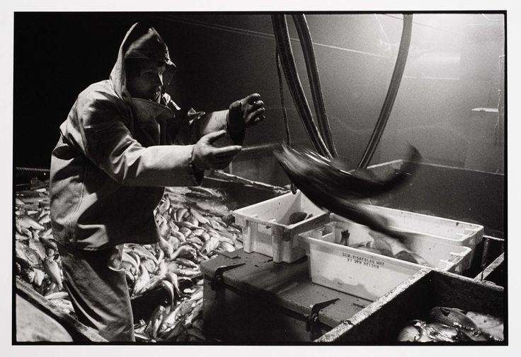 HD57 Elvira. Vis klaar voor de visafslag, Joost Guntenaar, 1981