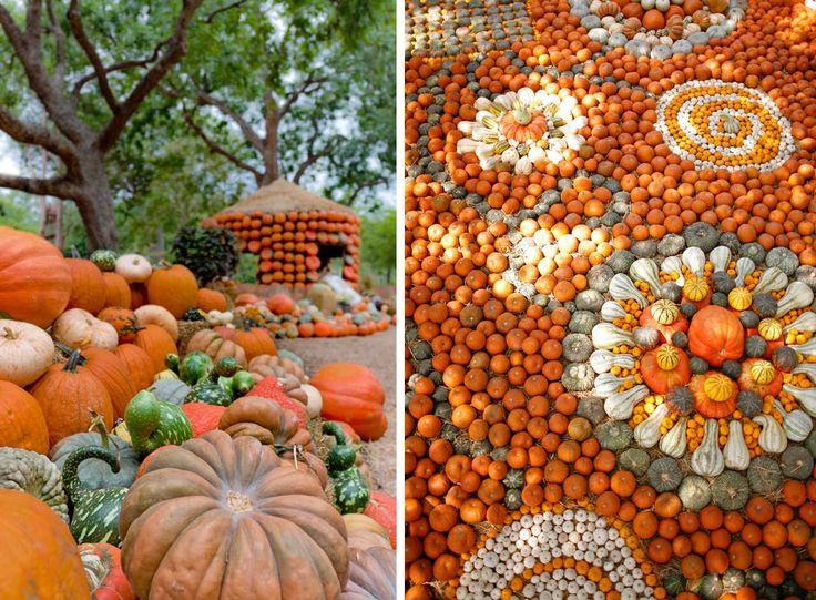 187 best images about pumpkin festivals on pinterest - Botanic gardens pumpkin festival ...