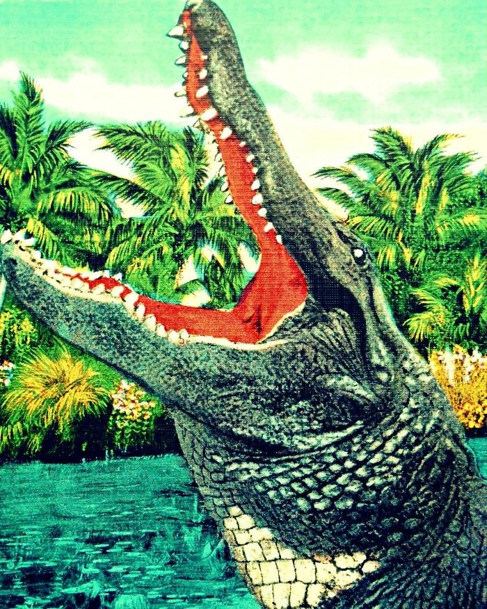 Alligator Print Florida Gator Art 16x20 photograph Retro Florida U of F 1940s salmon aqua reptile print kids room nursery via Beach4Good. Click on the image to see more!