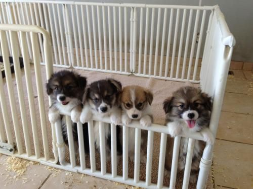 Puppy day care.