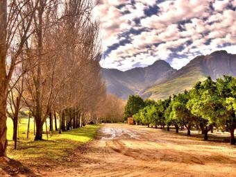 A pretty lane in Waterford, Stellenbosch, but I got mud all up my back.  I might need a spa treatment before wine tasting today!