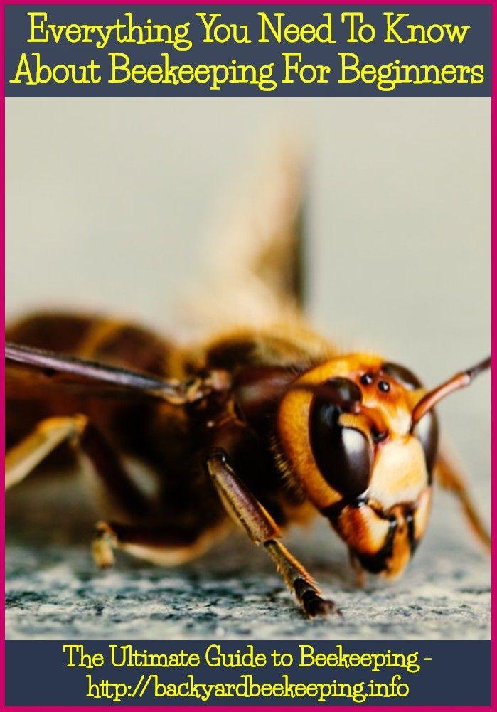 Keeping Bees In Your Backyard Bee Keeping Bee Backyard Bee