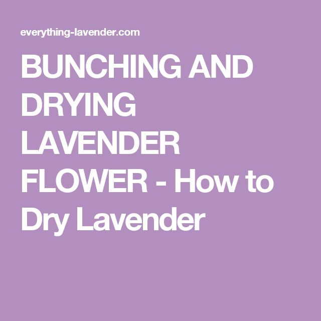 BUNCHING AND DRYING LAVENDER FLOWER - How to Dry Lavender