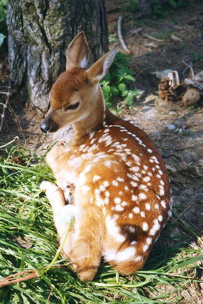 Bambi blijft schattig!