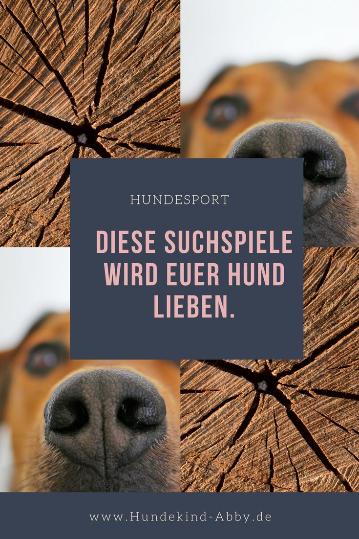 #Hund #Hundeblogger #Hundeliebe #Wissen #Beschäftigung Hunde || Erziehung || DIY || Wissen || Gesundheit