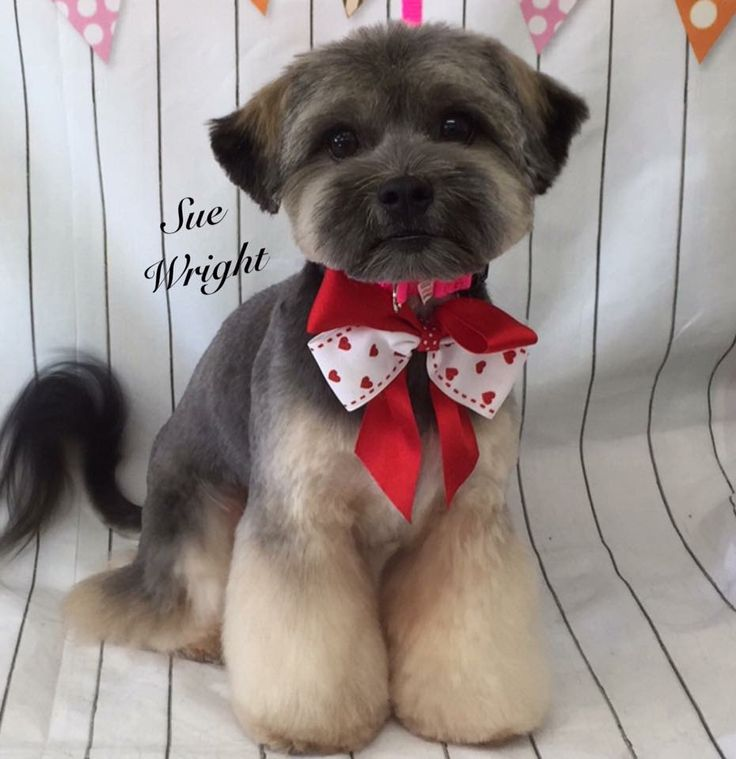 254 best dog grooming images on pinterest pets doggies and dog so cute solutioingenieria Images