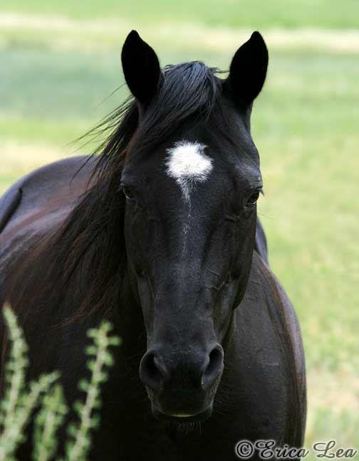 black stallion by selket47 - photo #1