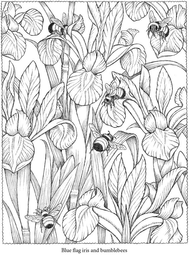 colouring in page sample from creative haven naturescapes coloring book via dover publications