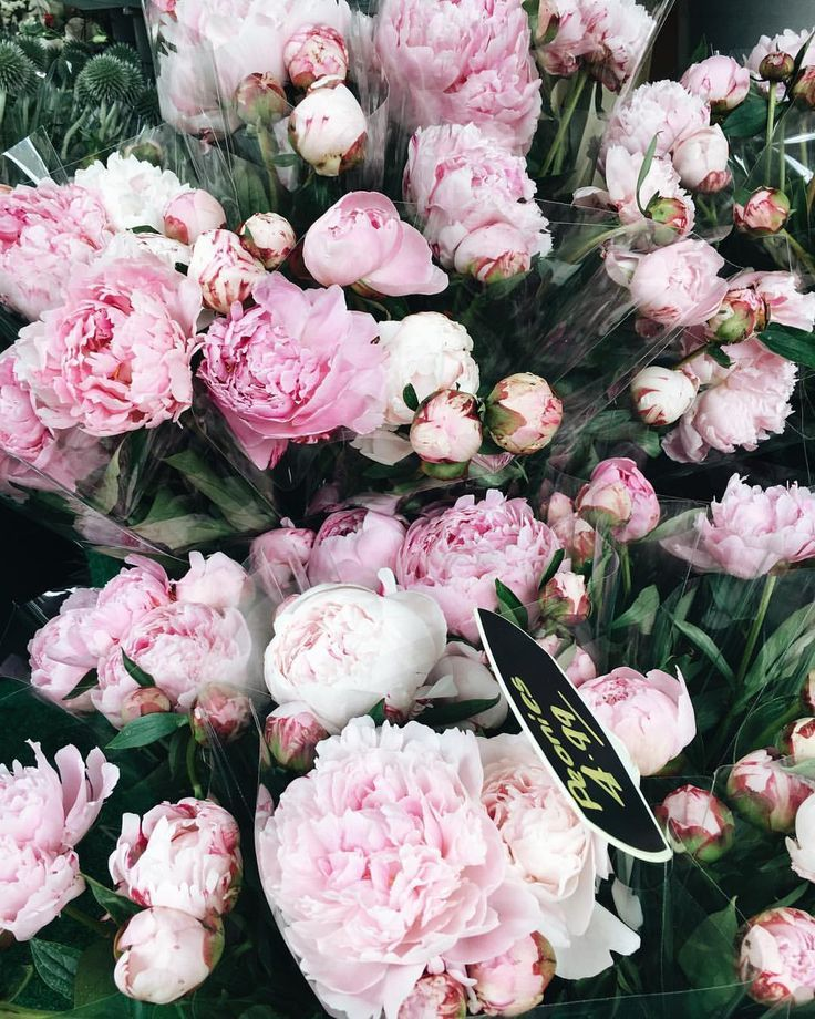 Inspirational Quotes On Pinterest: 25+ Best Ideas About Peonies On Pinterest