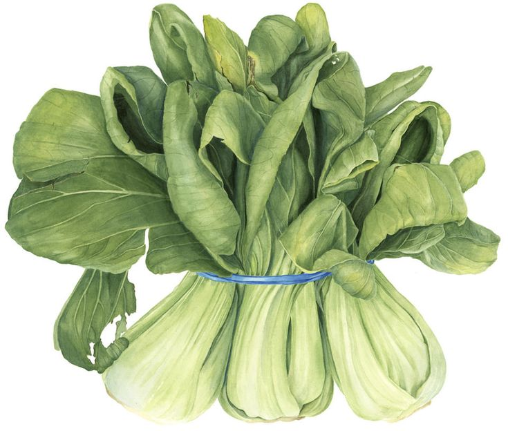 Botanical Vegetable Art Print - Bok choy Watercolor Painting by Sally Jacobs - Restaurant Wall Décor by SallyJacobsStudio on Etsy
