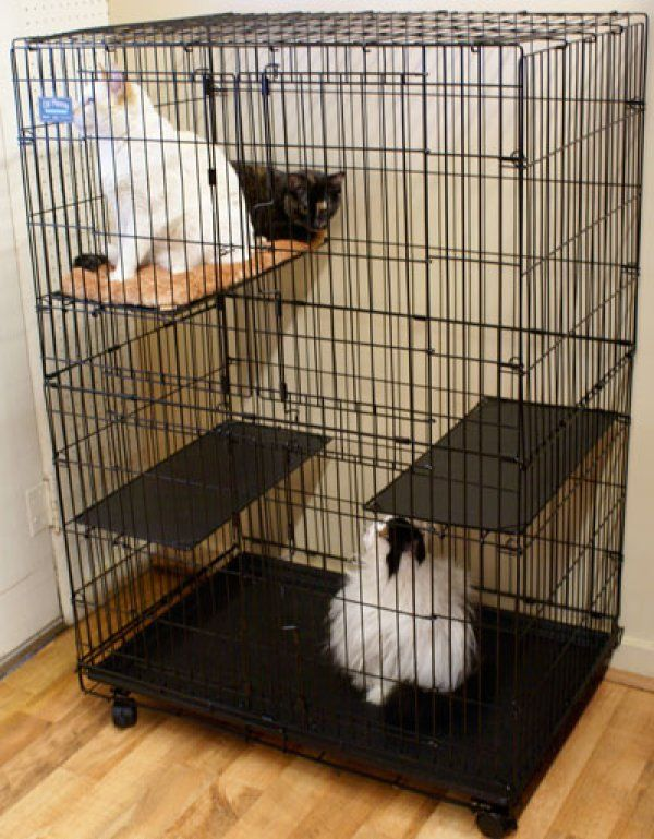 Here's a large wire cat cage with wheels and removable trays.