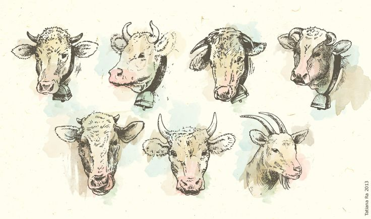 Рогато-молочный скот. Иллюстратор - Татьяна Ивлева