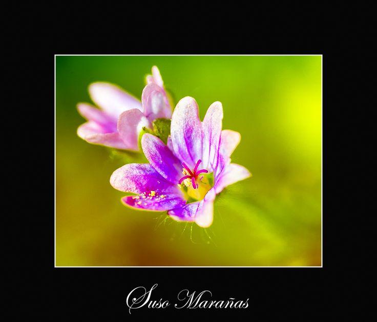 muy buenos días......... arrancamos este fantástico domingo primaveral.........