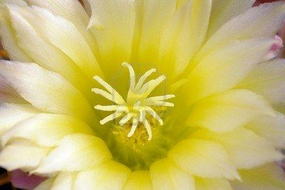 Cactus flower soft harmony