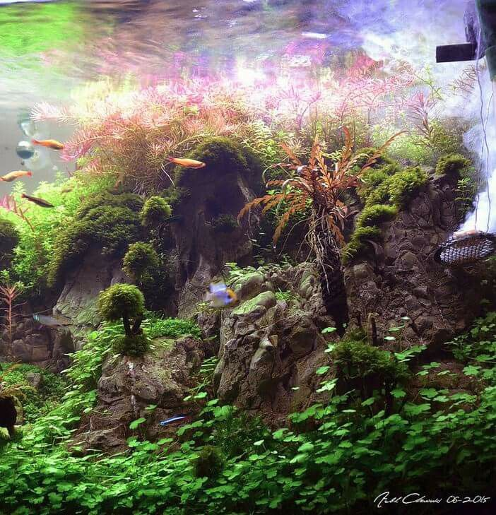 Best Aquascapes Terrariums Images On Pinterest Plants - Beautiful photography reveals underwater complexity aquariums
