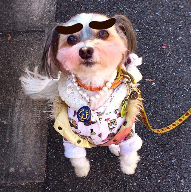 花子「んもぅぅ~、おっ母ったら、下から見たら鼻毛でてますよ?」 。 母「・・・。( ̄▽ ̄;)ラジャ。」 。 #あさんぽ #下から覗き見#チワマル#マルチワ#雑種#小型犬#シニア犬#Mix犬#愛犬#わんこ#わんぱく部 #mixedbreed #mongrel#toydog#cutedog#littledog#mydog#ilovemydog#instadog#dog#doglover#todaysdog
