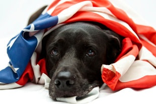 Burning question: Why do dogs hate fireworks?
