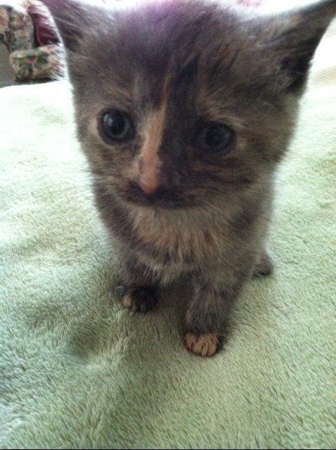 Freya S Cat Rescue