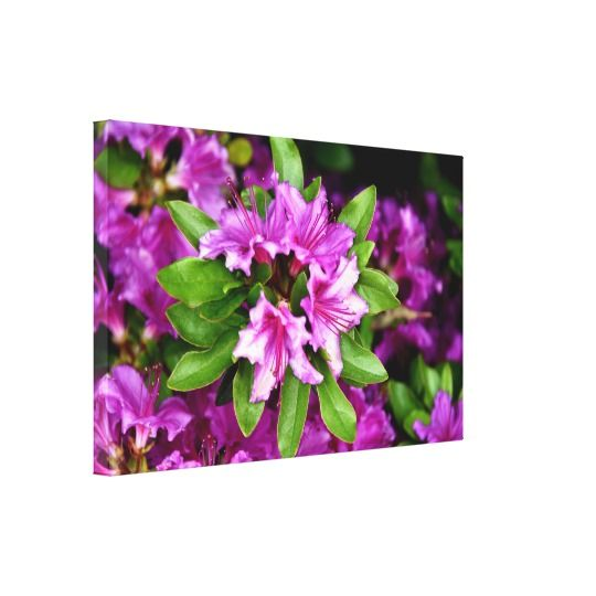 Azelia Canvas Print by www.zazzle.com/htgraphicdesigner* #zazzle #gift #giftidea #azelia #print #canvas #nature #flower #flowers #fuschia #nature