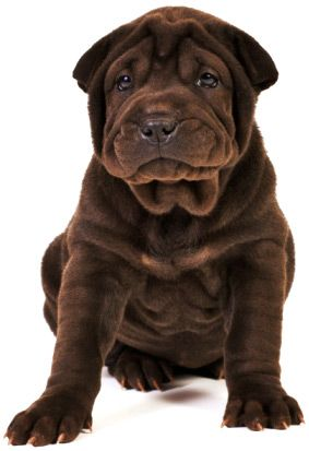 Secrets To Dog Training: Stop Your Dog's Behavior Problems! - http://dogtraining-4gswcqzf.thetruthfulreviews.com