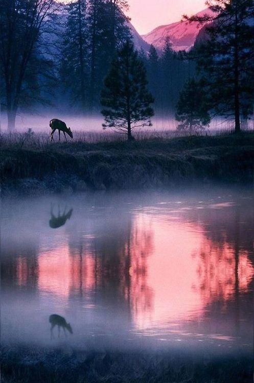 Yosemite National Park, USA,