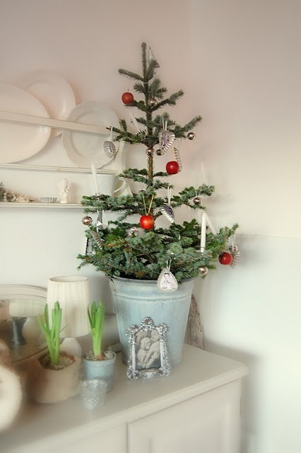 59 best amaryllis bulbs images on pinterest christmas for Bulbes amaryllis conservation