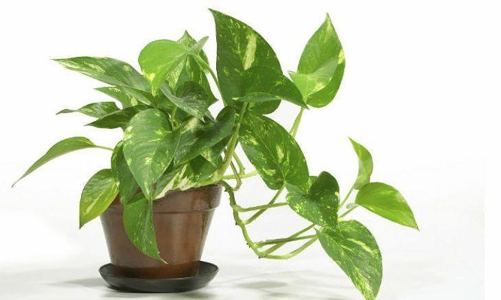 Plantele care nu trebuie sa lipseasca din casa ta! Indeparteaza energiile negative si atrag bunastarea financiara! – Cap Limpede