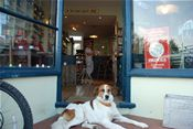 Woody relaxing outside Windy Corner Stores, Whitstable