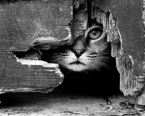 Black and white cat art photo