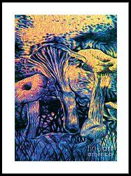 Mushroom Sunset Study By Knott Framed Print by Simon Knott