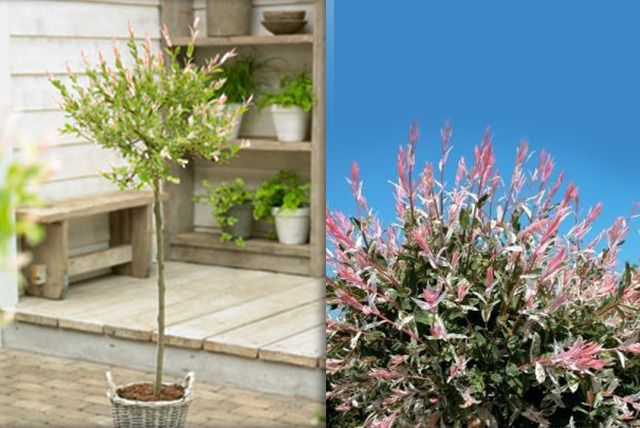 If your garden is looking worse for wear,  leaf  it to us and check out this tree-mendous deal…