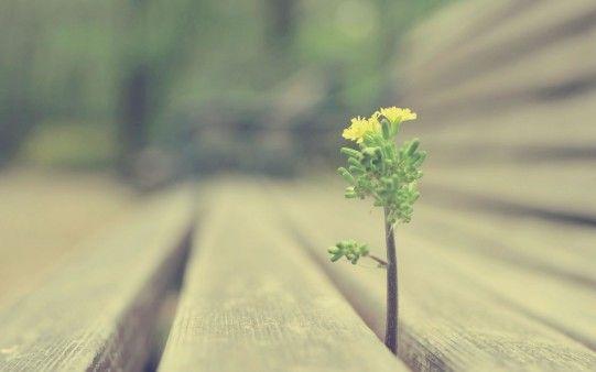 La Naturaleza se abre camino - Fotos para todo lo que estás buscando