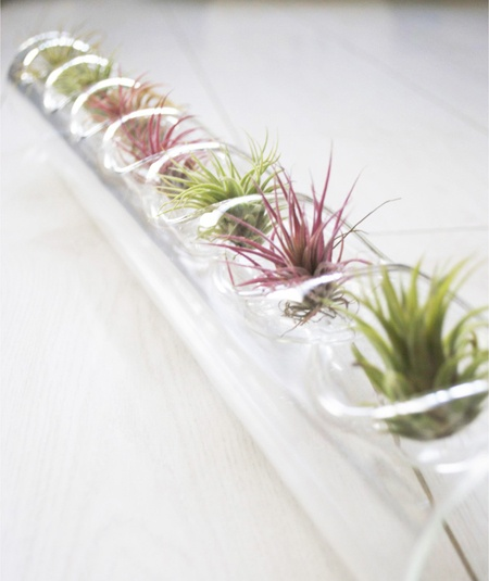 Glass bubbles with air plants