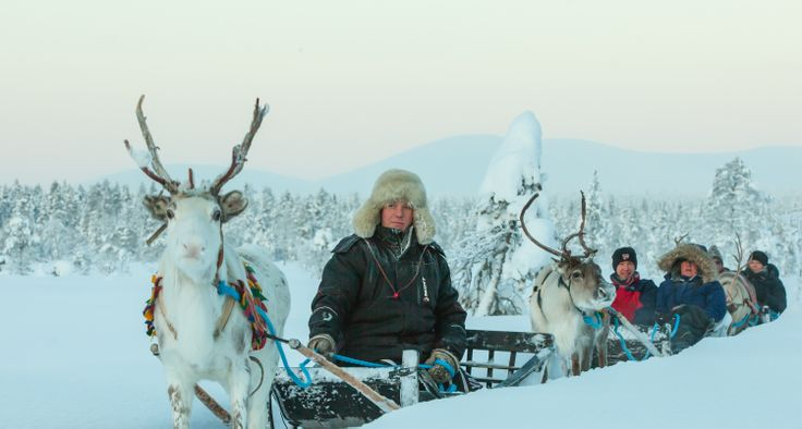 Reindeersafari at #Jeris #ScanAdventures