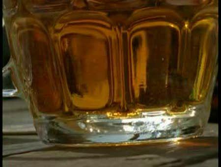 Abejas borrachas por savia fermentada. Naturaleza. - Video Online