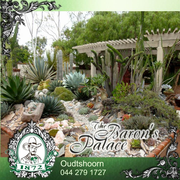 The perfect D.I.Y 'Karoo' garden idea! #DIY #Karoogarden #cacti