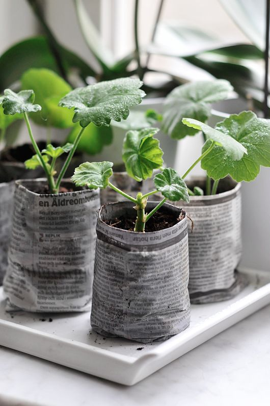 Newspaper pots for herbs. LOVE this!
