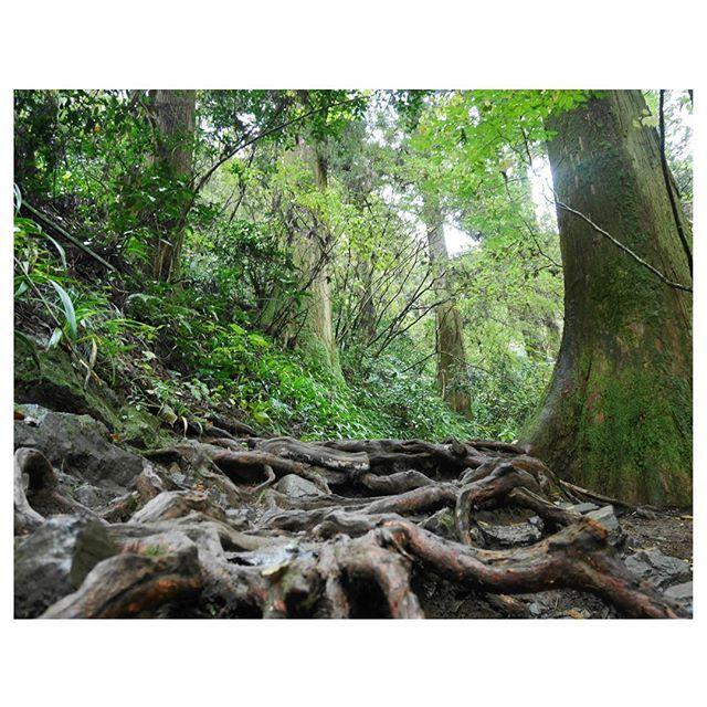 【la_happyday】さんのInstagramをピンしています。 《ガチンコ登山コースはこんな感じでした😅  Tシャツにサルエルパンツは、 完全にナメきっていた…笑  #ジブリ#もののけ姫 のセカイ  #東京#八王子#高尾山#登山#山#森#緑#森林浴#自然#秋 #旅好きな人と繋がりたい#タビジョ#山ガール #写真好きな人と繋がりたい#カメラ好きな人と繋がりたい #ファインダー越しの私の世界#カメラ女子 #ミラーレス#一眼#カメラ#LUMIX#LUMIXgf7 #東京カメラ部#IGersJP#team_jp_東#お写ん歩#奥行き同盟》
