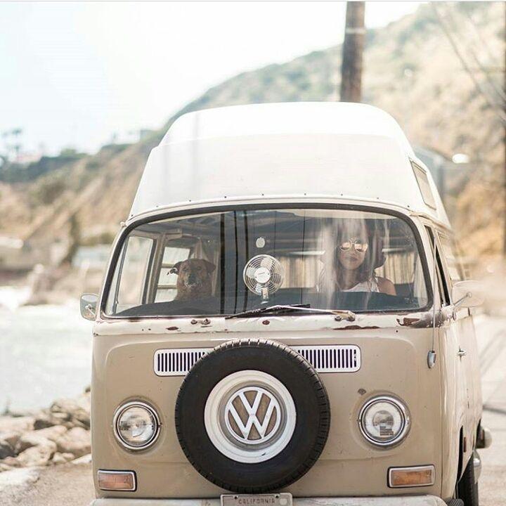 Growwiththeflow Co Vanpetsrule Campingpets Campingdog Campingcat Vancat Vandog Vandogsrule Vanlife Vanlifediaries Modernnomads Wohnwagen Bus Wohnen