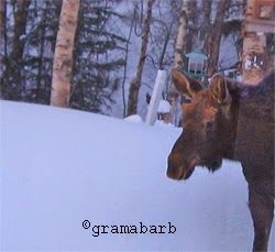 The Urban #Moose Story