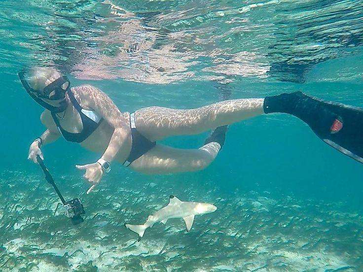 Shark nursery ... We love babies!!! ~ Suunto Diving adventure