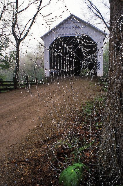 Cox Ford Bridge, a burr arch bridge, Parke County, Indiana as seen through a dew laden cobweb. Each autumn Park County has a Covered Bridge Festival and tours of its several remaining bridges are offered as well as eyes full of beautiful fall foliage.