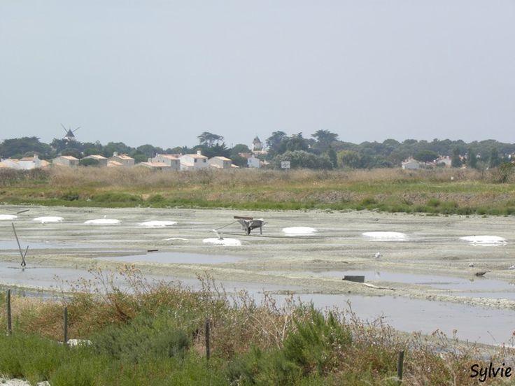 """Randonnée """"Chemin de mer et de marais"""" / Ile de Noirmoutier / Pays-de-la-Loire"""