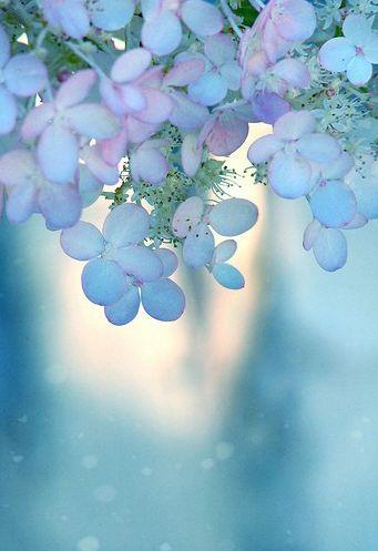 Blue pastel flower in macro / Cool blue. Photo, Pastel, Flower, Beauty.