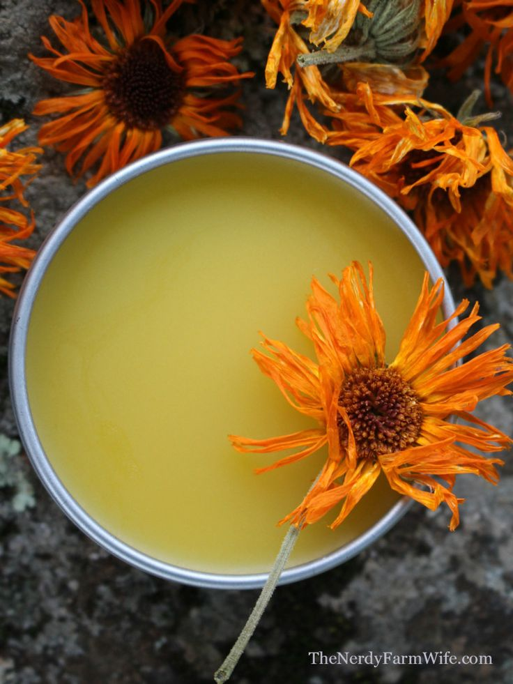 Calendula oil salve.  Calendula oil for ear ache in people and pets and ear mites in dogs...