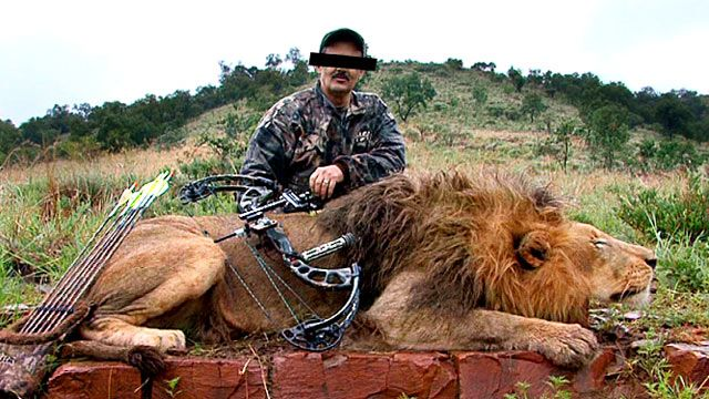'Canned hunting': the lions bred for slaughter --  Canned hunting is a fast-growing business in South Africa, where thousands of lions are being bred on farms to be shot by wealthy foreign trophy-hunters