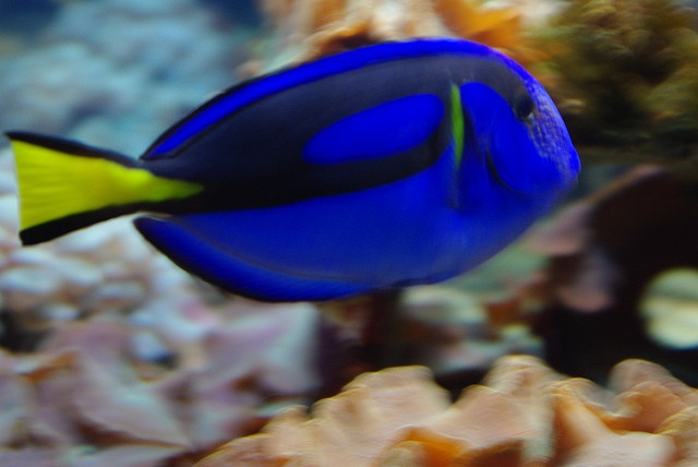 17 Best Images About Tropical Fish On Pinterest Colorful